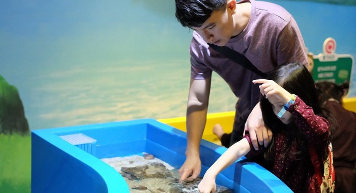 Sensory-Friendly Nights at the Aquarium